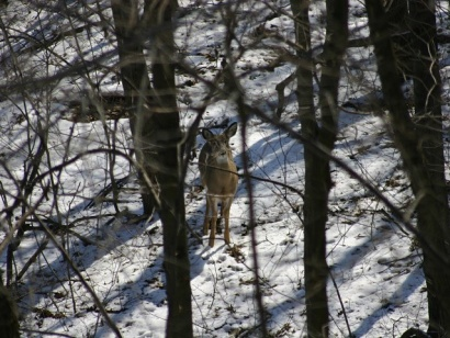 Allamakee White Tails Unlimited