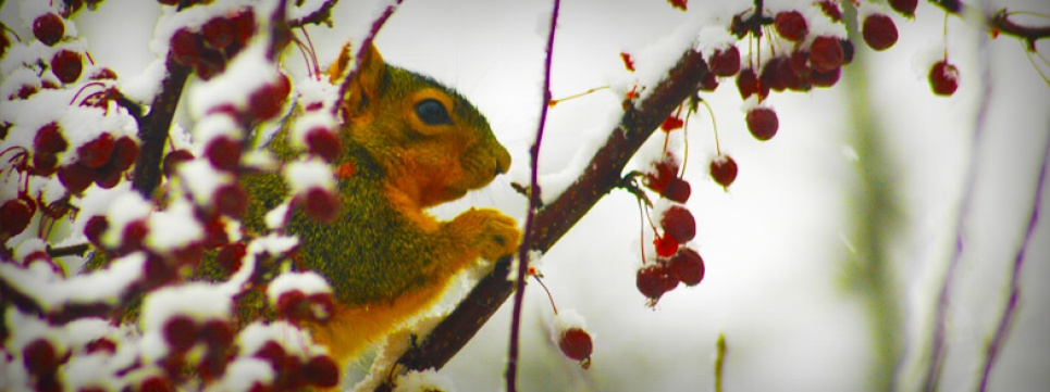 Winter - Squirrel